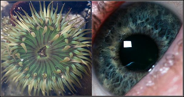 eye-compare