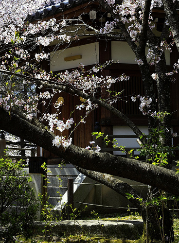 Sakura and Building detail