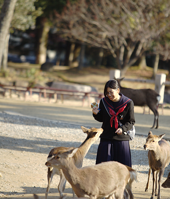 Deer and Japanese Schoolgirl in Nara Park.